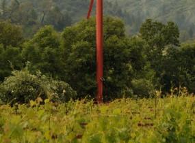 www.araujoestate.com
